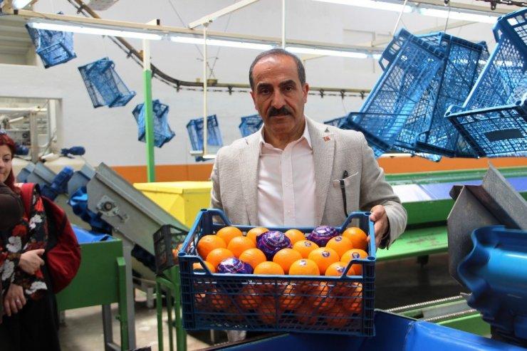 Tarım OSB'ler, Ege tarım ürünleri ihracatını 1 milyar dolar artıracak