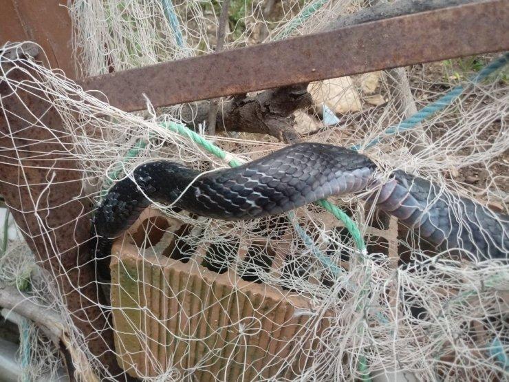 Ağlara takılan kara yılan itfaiye ekiplerini seferber etti