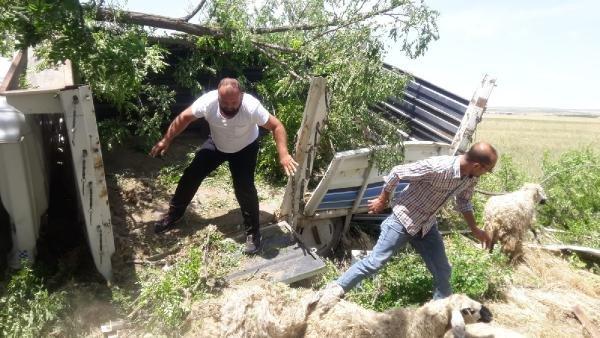 Konya'da küçükbaş taşıyan kamyonet şarampole yuvarlandı!
