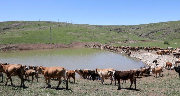 Erzurum Büyükşehir Belediyesi'nden gölet rekoru