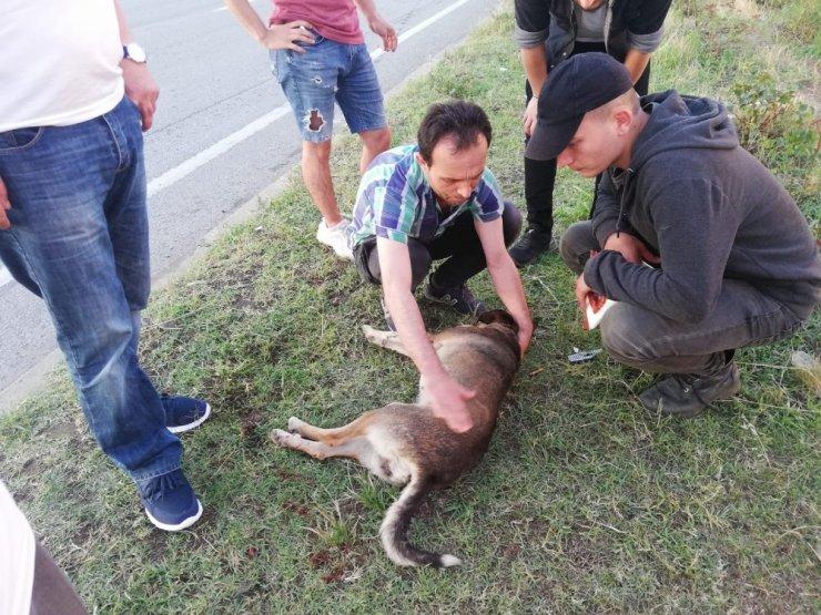 Çarptığı köpeği geri dönüp veterinere götürdü