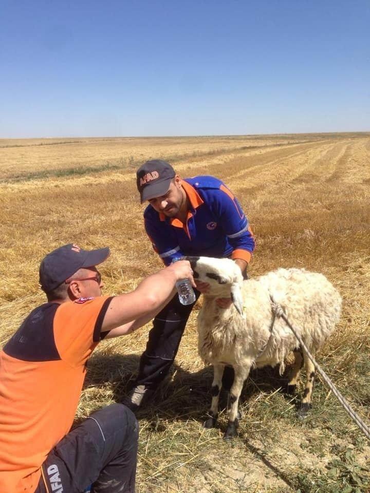 Kayıp engelli çocuk aranırken çukura düşen koyun kurtarıldı