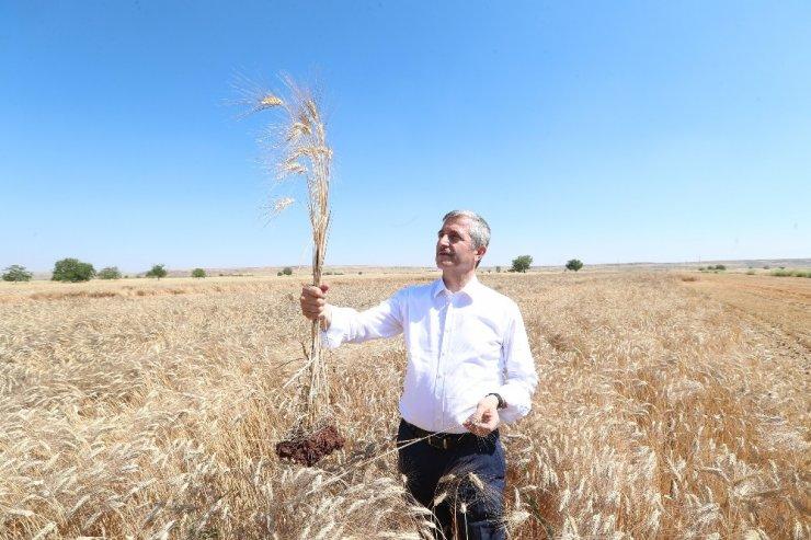 Başkan Tahmazoğlu çiftçilerin sevincine ortak oldu