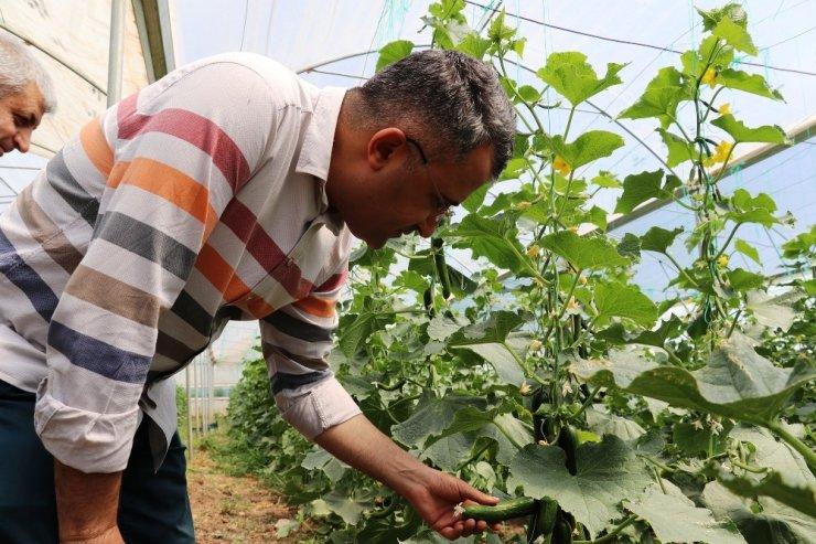 Gevaş'ta sebze üretimi