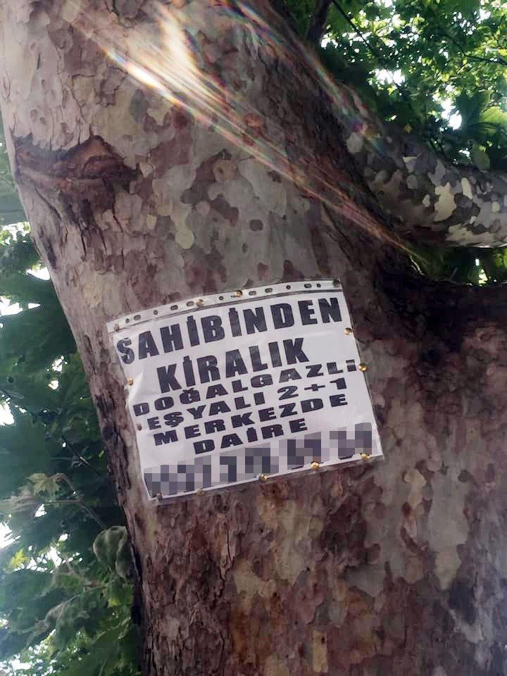 Ağaçlara asılan ilanlar zarar veriyor