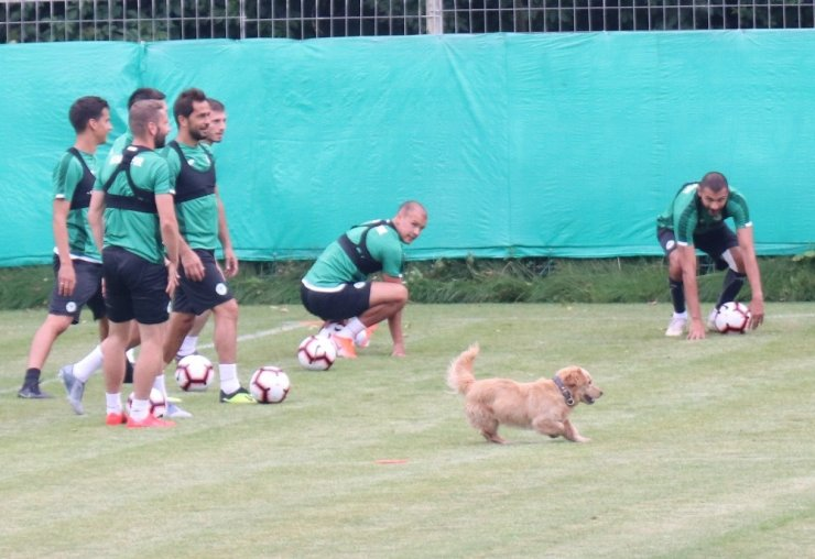 Konyaspor antrenmanına davetsiz misafir