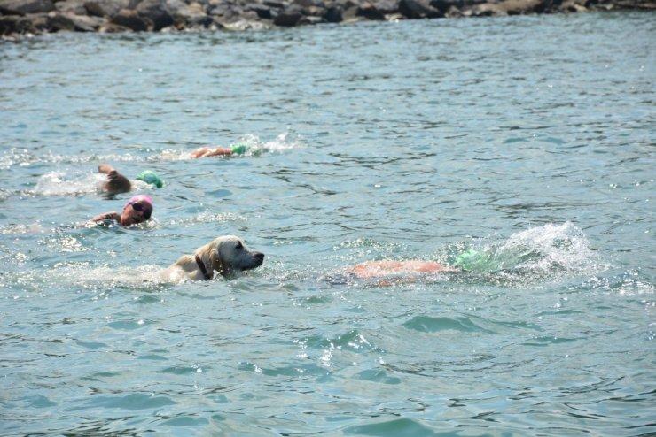 Yüzme yarışında sürpriz misafir