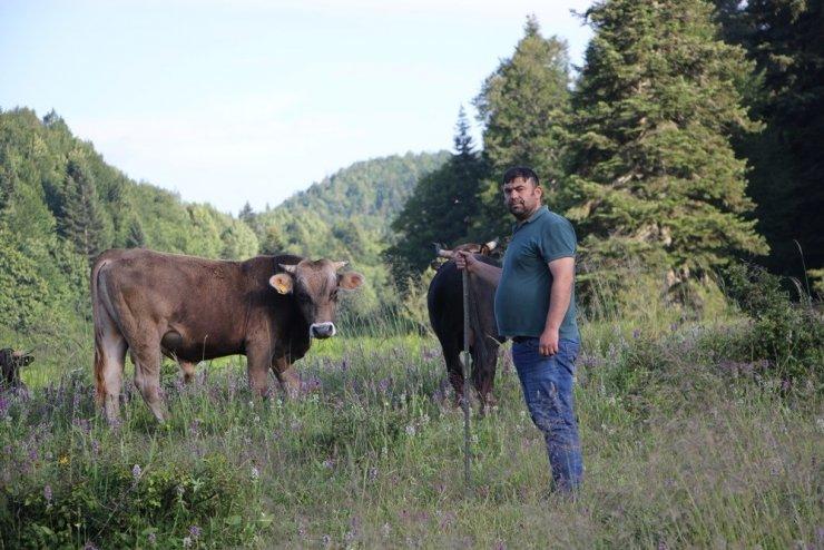 Gezmek için geldiği bin 110 rakımlı yaylada 8 yıldır organik hayvan yetiştiriyor