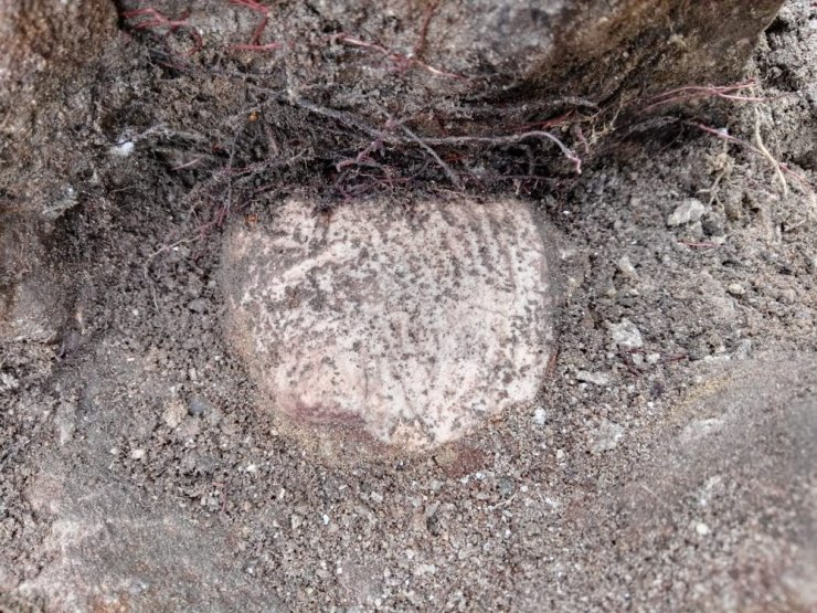 Denizi olmayan Bilecik'te deniz canlıları fosilleri bulundu