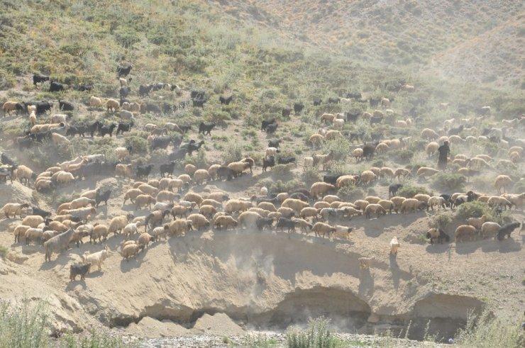 İran'dan gelip 3 bin 200 TL karşılığında çobanlık yapıyor