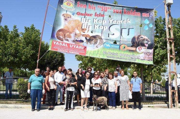 Tarsus'ta sokak hayvanlarına özel suluk ve mama kapları