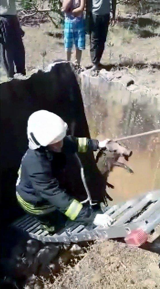 Su havuzuna düşen yavru domuzu itfaiye kurtardı