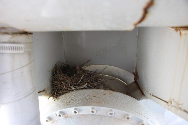 Kuşlar beton mikserine yuva yaptı, araca çalıştırılmama kararı alındı