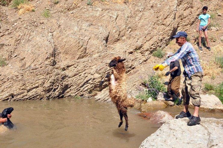 Koyunların yıkandığı gölette yüzme keyfi