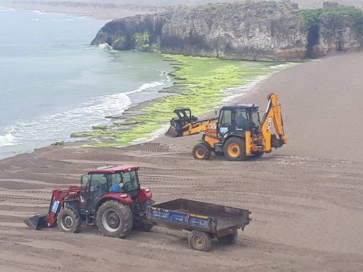 Kandıra sahillerinden 10 kamyon yosun toplandı