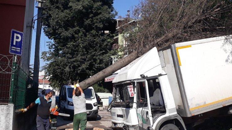 Yasak olan yokuşa giren kamyonet freni patlayınca ağaçları yerinden söktü