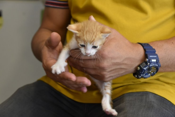 Pendik'te hayvansever kuaför, sokak kedisini sahiplendi