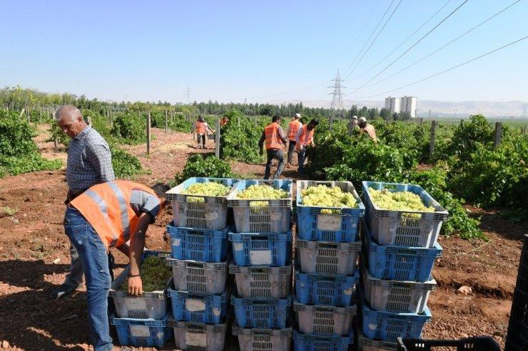 Belediye meyveleri yoksulların yüzünü güldürüyor