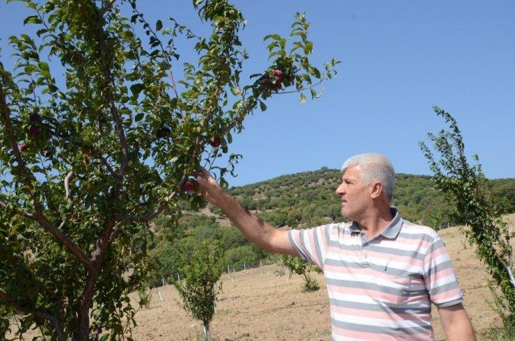 Yunusemre'nin organik bahçeleri ilk meyvelerini verdi