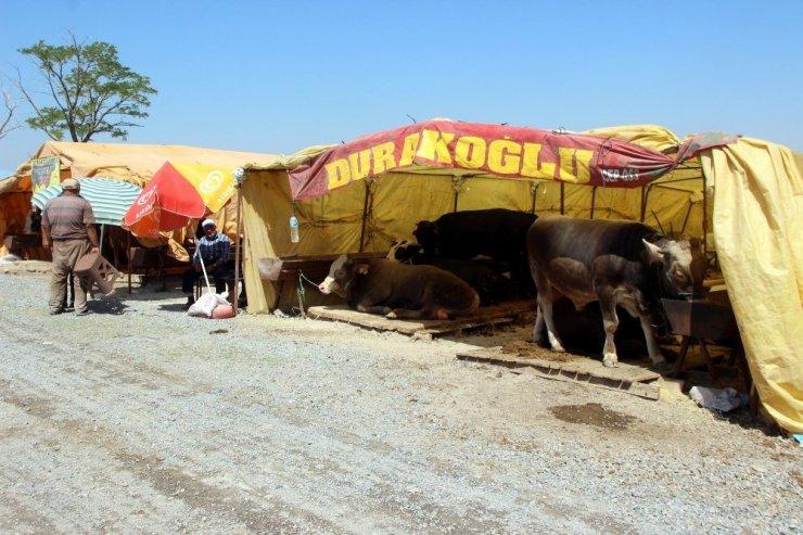 Kayseri'de kurban pazarı müşterilerini bekliyor
