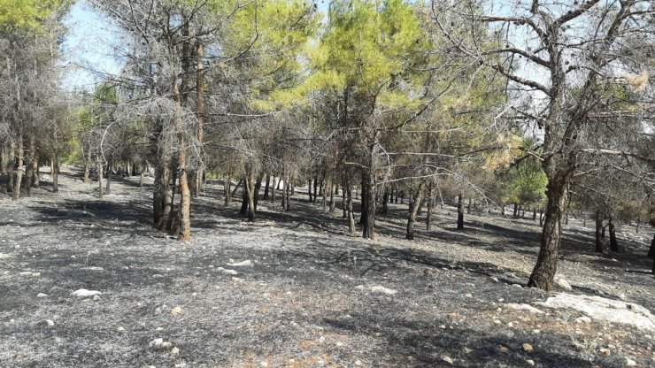 Karadağ Ormanlık alanda yangın paniği