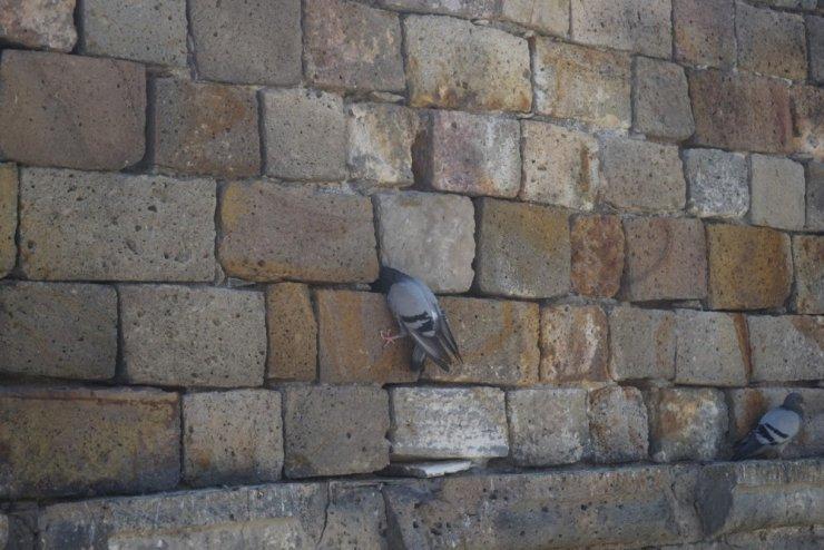 Kervansaray duvarına sıkışan güvercin kurtarıldı