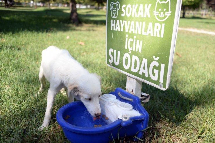 Sokaktaki canlara Osmangazi şefkati