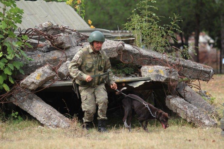Sınır ötesi operasyonlara yerli ırk köpek