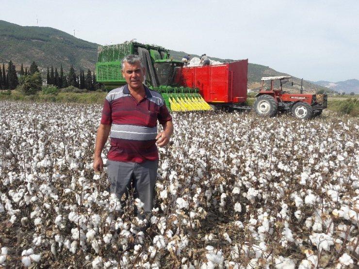 Türkiye'nin pamuk ambarı Söke Ovası'nda hasat buruk başladı
