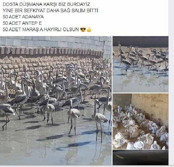 Konya'da Flamingo satarken yakalandı! 16 bin lira cezaya 'abarttınız' dedi