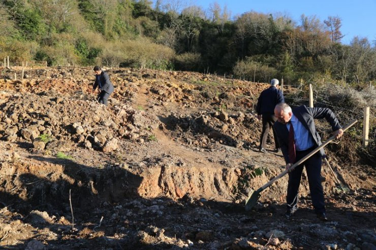 Sabun ağacı fidanları Artvin'de toprakla buluştu