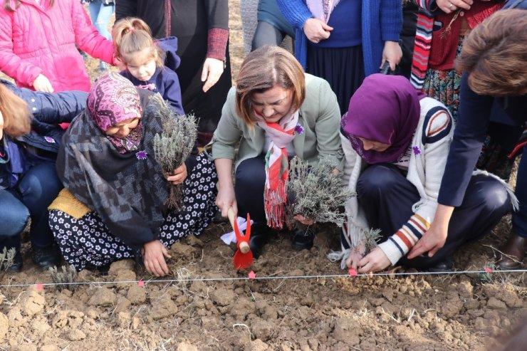 İzmitli kadınlar üretime lavanta bahçeleriyle ortak oluyor