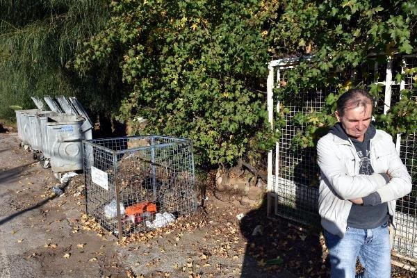Marmaris'te zehirlenen üç köpekten ikisi öldü