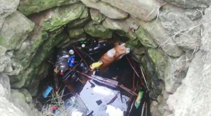 Kuyudan köpek kurtarma operasyonu