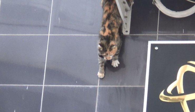 İnatçı kedi itfaiyecileri pes ettirdi