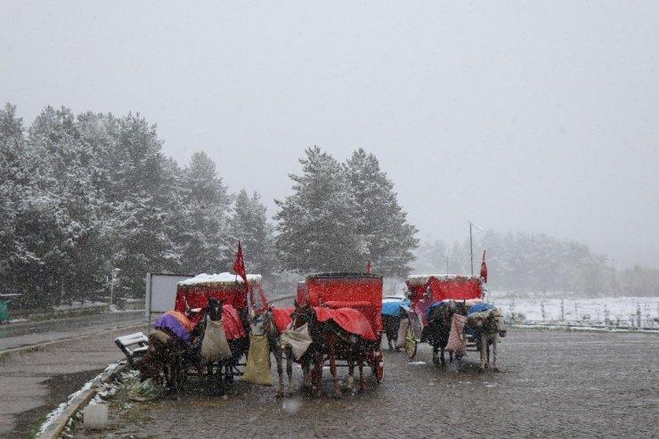 Bolu'da, Ruam hastalığı şüphesiyle 8 at karantinaya alındı