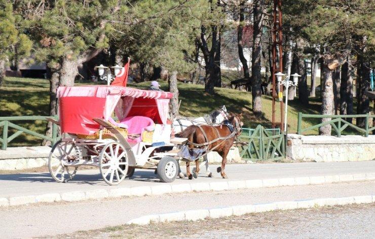 Abant Tabiat Parkı'na gelen tatilcilerde ruam hastalığı endişesi