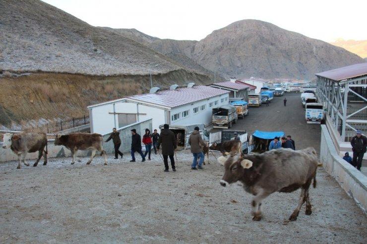 Oltu'da besicilerin kapalı canlı hayvan pazarı memnuniyeti