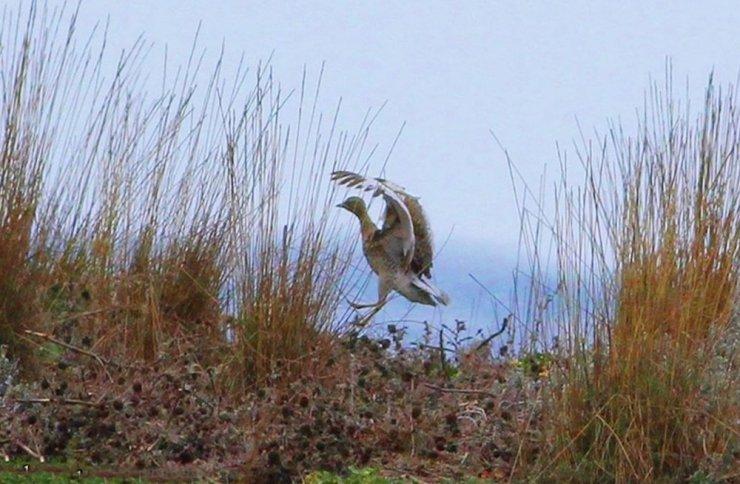 Kastamonu'da şuana kadar 280 kuş türü geçti