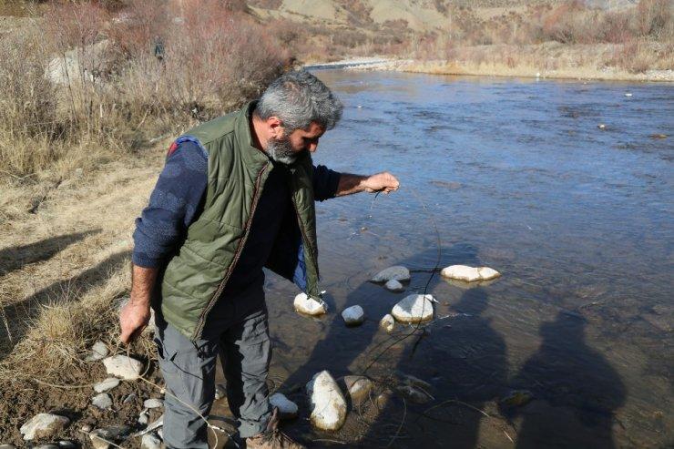 Pülümür çayına kaçak balıkçıların verdiği elektrik, balıkları telef etti