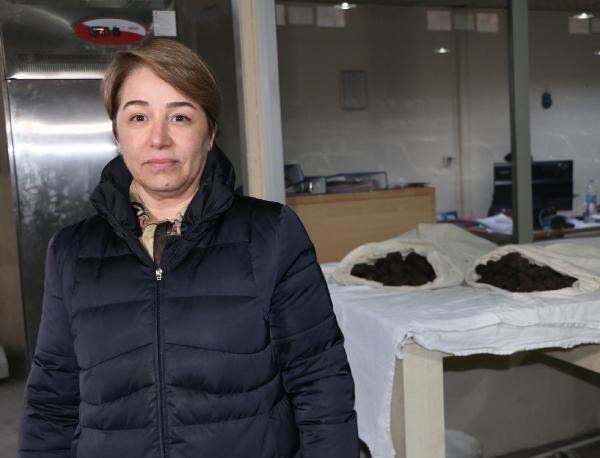 80 kilo trüf mantarı, ihale ile satışa çıkarıldı