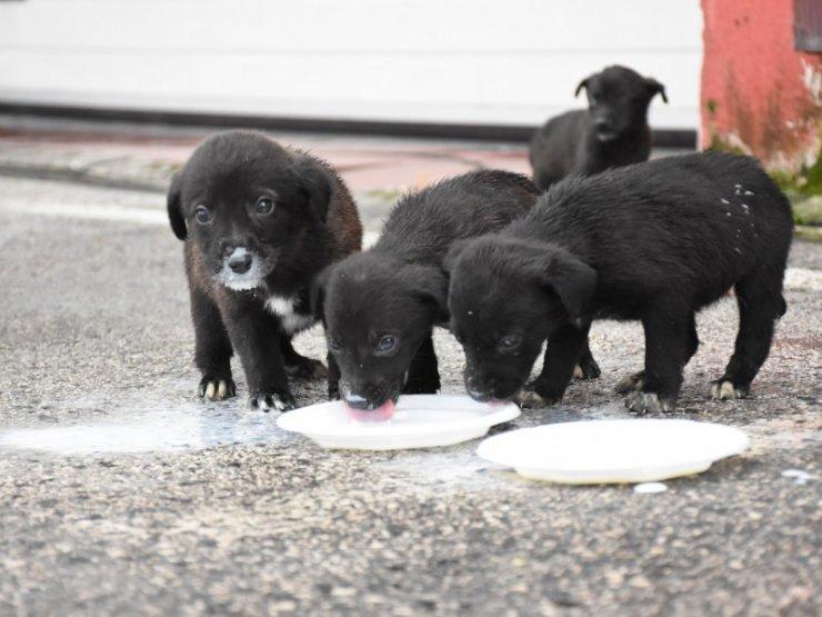 Köpek yavruları için itfaiye seferber oldu