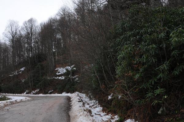 Kartepe'ye beklenen kar düşmedi, tatilciler hayal kırıklığına uğradı