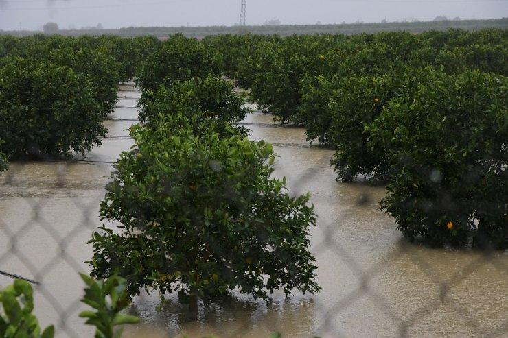 Adana'da tarım arazileri sular altında kaldı