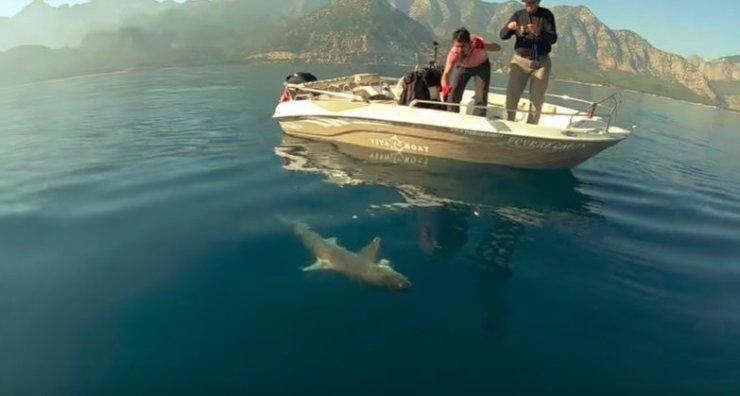 Antalya'da dev köpek balığı oltaya geldi