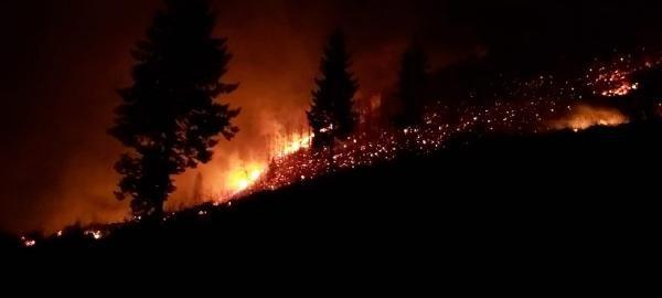 Karadeniz'de 26 noktada yangın: 5 ev yandı, tarım arazileri zarar gördü