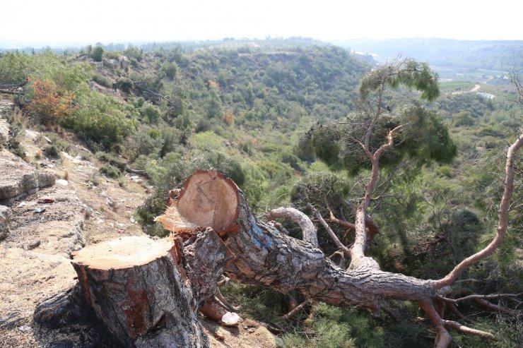 Mersin'deki ağaç katliamıyla ilgili 1 kişi tutuklandı