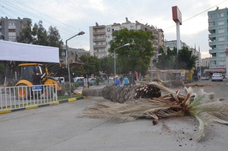 Tarsus'ta kırmızı palmiye böceği mücadelesi