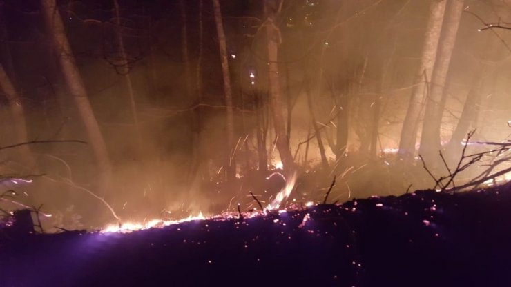 Ordu'daki orman yangınlarına müdahale sürüyor