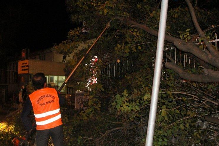 Samsun'da okul girişinde ağaç devrildi